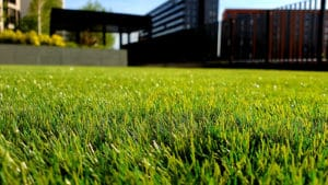 Close-up image of grass