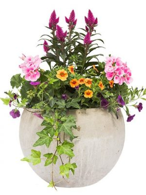 Summer / Spring flower pots isolated on a white background